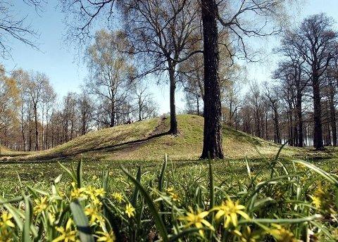 SKIPSGRAV: På en slette blant gravhaugene i Borreparken er det funnet en skipsgrav fra vikingtiden.