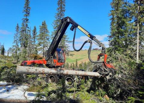 ØKER: Tømmerprisene er ikke i nærheten av hva trelast koster ut fra sagbruk, men tømmerprisene er også på vei opp, slik prisen på trelast er. Her er det maskinlaget Sollid Skog fra Surnadal som er i aksjon på skogen i Romundstadbygda i Rindal.