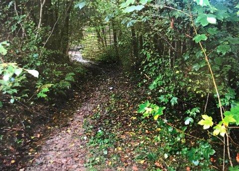 DNA-spor fra en voldtekt i dette skogholtet i 2004 ble plutselig høyaktuelle da en annen alvorlig sak dukket opp.