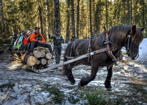 NATURRESERVAT: Et av de nye verneområdene blir liggende inntil Stenberg museum. Her fra området en tidligere vinter der man viser tynningshogst med bruk av hest. Noe som fortsatt kan bli aktuelt i skjøtsel av skogen.
