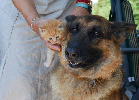 BLE REIST FRA: Kattungen Emil ble funnet forlatt på et industriområde i Larvik. – Luna steller og koser med kattungene, sier leder for Miabua, Vigdis Gyring, her sammen med schäferen Luna.
