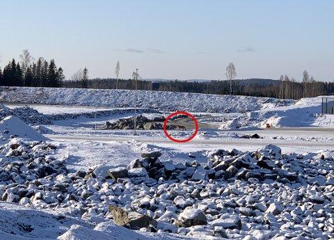 KLOSS HOLD: Ulven kikket rett mot Kim André Tolfsen, som sto bare 100 meter unna. Like etter fulgte den andre ulven.