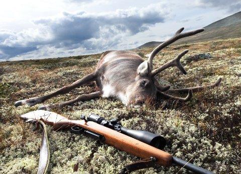 Innsats: Årets jakt på hjortevilt er en gedigen dugnad i kampen mot skrantesyke.Foto: Vidar Heitkøtter
