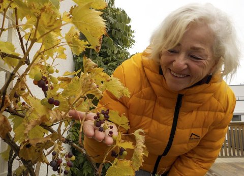 SPISEKLARE DRUER: Anne Ki Klemmetsen synes det er artig at det faktisk er mulig å dyrke druer i Holmestrand sentrum.