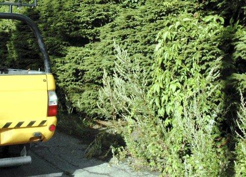 Sørg for sikt: Trygg Trafikk oppfordrer alle til å være med på å gjøre skoleveien oversiktlig for skolebarna. Arkivfoto