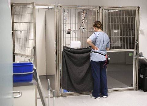 Dyrepleier Nicola Tøkje tar seg av den siste smittede hunden som er kommet inn til veterinæren ved Anicura på Nordås i sommer. Veterinæren i samme selskap avfeier at det er samme sykdom som nå herjer. ARKIVFOTO: RUNE JOHANSEN