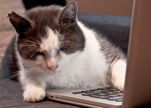 ROVDYR: Er vi tjent med at kommentarfeltene i nettdebatter og blogger fremstår som kattens lek med musen? Hvorfor blir så mange som rovdyr når de kommenterer på nettet, undrer Sandnespostens nye blogger.