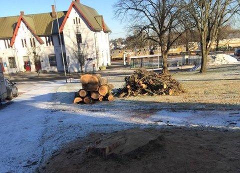 Kommunen felte sist uke et tre ved Jenrbanestasjonen. Kommunen sier treet var dødt og at de på bakgrunn av dette felte treet.