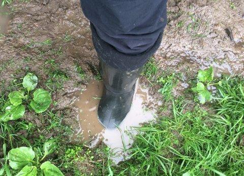 PROBLEMETS KJERNE: Dype hull etter hestenes hover fylles med sølevann.