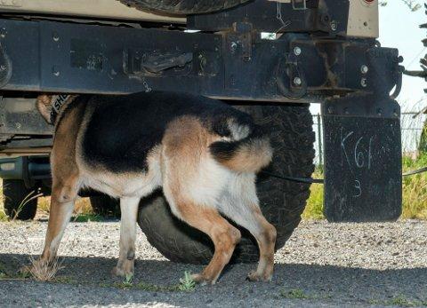 REDSKAP: Narkotikahunder er viktig redskap i kampen mot narkotika.