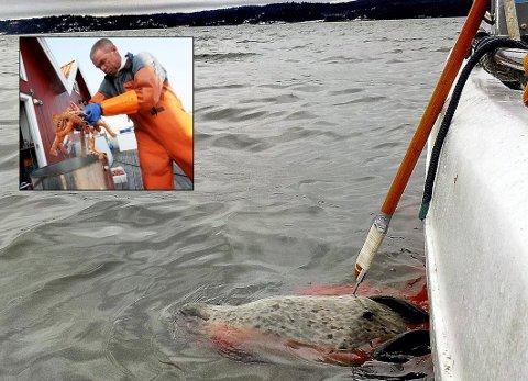 IKKE HØRT: Yrkesfisker Kjetil Andersen har tidligere uttalt at det bør fanges mye mer sel i Oslofjorden, men Fiskeridirektoratet er ikke enig.