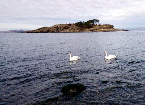 BREDDEN? Hvor bredt er Gullholmsundet på det smaleste?