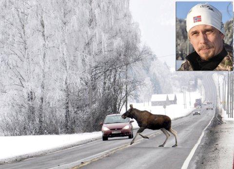 Elg krysser E16 på Steinsletta Steinssletta. Bilisten så elgen, og unngikk sammenstøt.