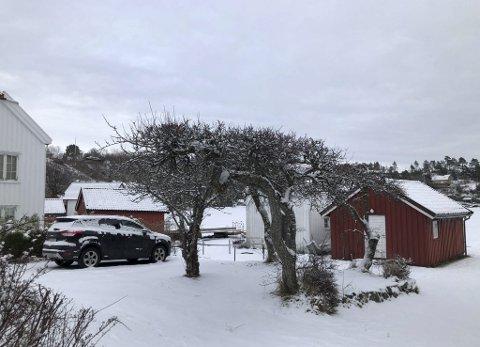 Narestø: Christina Ødegård falt for og flyttet til denne eiendommen ved sjøen på idylliske Narestø for 10 år siden. Hun bor der hele året og bruker nær en time hver vei til jobben i Åmli. Nå ønsker hun seg dør i den hvite boden som ligger bak trærne på bildet. Foto: Siri Fossing