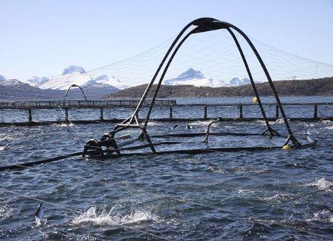 Marine Harvest: Her fra et av selskapets anlegg i Gildeskål, der det er kamp om lokaliteter for lakseoppdrett. Foto: Marine Harvest
