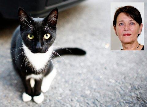 Hjemløse katter er et stort problem. Det er ingen grunn til å gi dem ni liv.