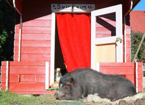 Trulte utenfor grisehuset sitt i Lier.