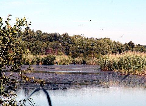 Nær reservatet:  Mange mener pukkverket blir liggende for tett inntil Arekilen reservat, og at dyre- og fuglelivet vil bli skadelidende.