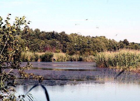 Omstridt: Arekilen reservat er nabo til pukkverkstomten på Kirkeøy. Det er omstridt hvordan reservatet med fugler og dyreliv vil bli påvirket av pukkverket.