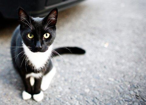 ILLUSRASJONSFOTO: En 70 år gammel mann er dømt til elleve måneder i fengsel for brudd på dyrevelferdsloven. Han bodde på en hytte med over 60 katter.