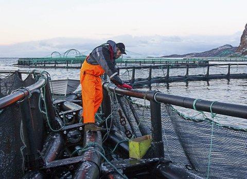 IKKE I SJØEN: Lokalpolitikerne bør ikke legge til rette for oppdrettsanlegg i sjøen i Kragerøskjærgården, mener KV-redaktøren. ILLUSTRASJONSFOTO: Scanpix