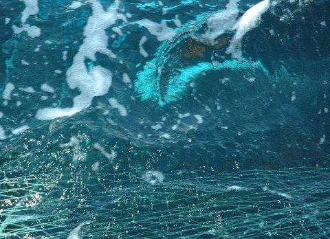DRO IKKE GARNA: Skipperen overholdt ikke røktningsplikten, og det ble en kostbar affære.