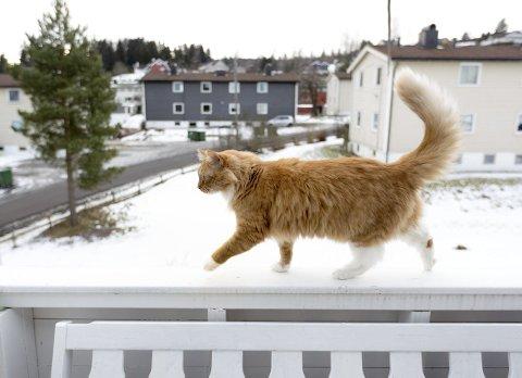 Gatas vokter: Pusur (4) har fått et dårlig rykte i nabolaget. Han krangler med både mennesker og dyr, og nå tør ikke lenger eieren å slippe ham ut alene. Foto: Lisbeth Andresen