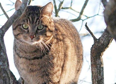 JEGER: Katten er en jeger, og mang en katt har stolt vist frem byttet sitt til eier.