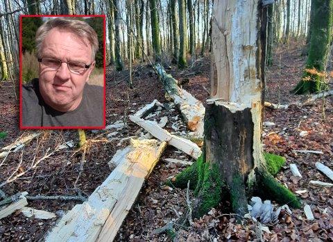 FALT I BAKKEN: Dette synes møtte Jon Torjus Alten da han var i Bokemoa-skogen denne uken.