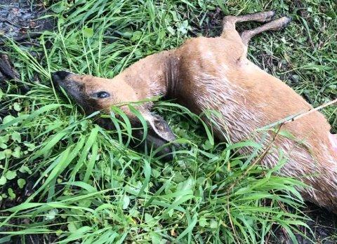 Dyret ble funnet på P-plassen.