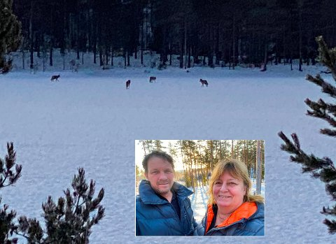 SPESIELT SYN: Kjærsti og Jan Erik Olsen fikk en mektig naturopplevelse langs veien torsdag morgen. De første bildene ble knipset klokka 08.01.