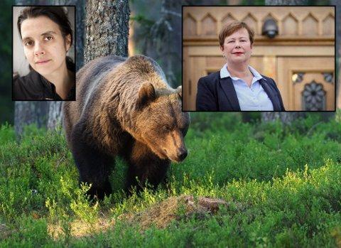 Siri Martinsen og NOAH og Siv Mossleth (Sp) er flammende uenige om hvor vidt vi skal ha bjørn i nordnorsk natur.