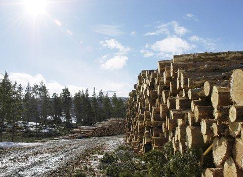 FUSJON I SKOGEN:Det er på ingen måte opplagt og dokumentert at større volum gir høyere tømmerpris og bedre lønnsomhet for skogeier, skriver innsenderne.