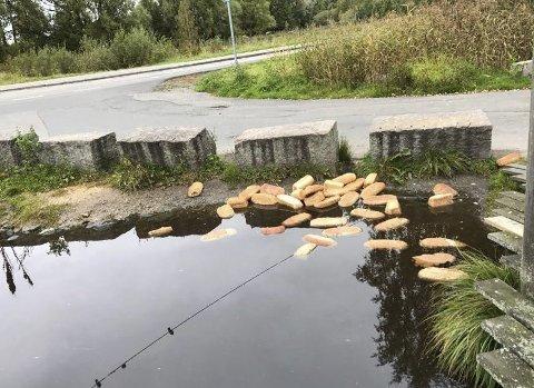 DUMPING: Bymiljøetaten skal nå sette opp skilt i håp om å unngå overmating og dumping av store mengder brødvarer ved Østensjøvannet. Foto: Jenny Stillerud