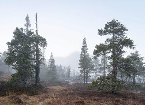 STILLES UT:  «Veståsen 15» er blant bildene som Per Berntsen stiller ut på Galleri Riis i Oslo. Utstillingen åpner 19 september og henger oppe til 12.oktober.