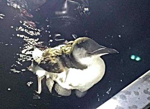 REDDET: Dene fuglen var heldig, ettersom noen oppdaget den før det var for sent.
