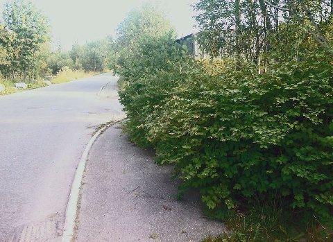 TRAFIKKFARLIG: En beboer i Dunihagen har i flere år vært bekymret over en høy hekk i boligfeltet (Bildet viser ikke den aktuelle hekken).