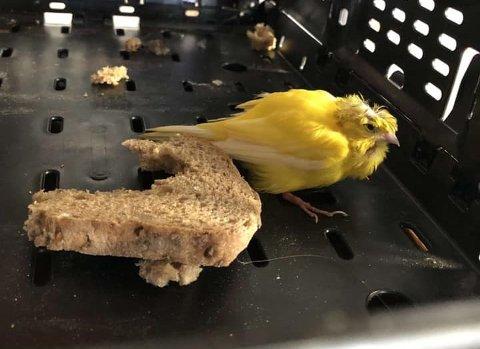 Vet du hvem som eier denne fuglen?