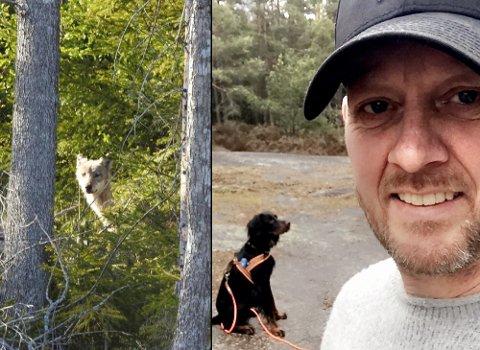 OPPLEVELSE: Ulven Trond fikk øye på er antakeligvis den samme som Ole Jacob Johansen knipset bilde av i Balkeskogen ved Rygge onsdag ettermiddag.