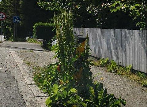 Dette hindermarkeringsskiltet er inngrodd i Høymule, opplyser fotograf Frode Hegerland.