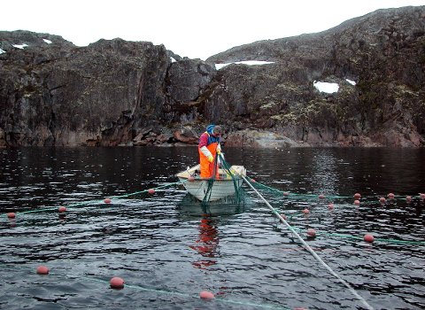 LITE IGJEN: Stadige kutt i fisketidene har gjort at det er lite igjen av det tradisjonsrike sjølaksefisket. Det er kun et fåtall som holder på sammenlignet med tidligere.