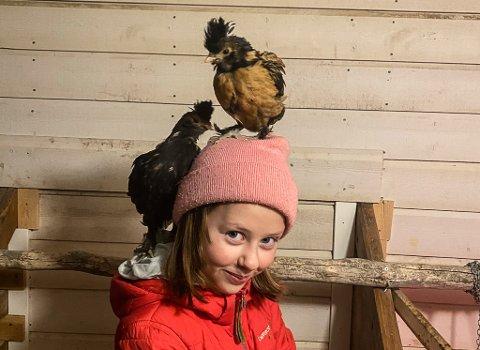 FJÆRKLEDDE VENNER: Maja Pedersen Brenli (9) har fått seg åtte nye fjærkledde venner. Her med Fjørdis til venstre og Søtnos som sitter pyntelig på hodet.