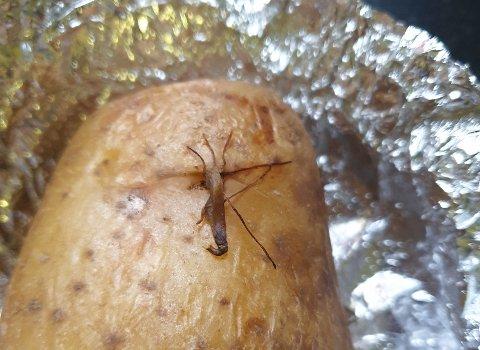 IKKE FLUE: Noen kunder av Potetbaker'n sperret øynene opp da de trodde de hadde fått en flue i poteten sin. Dette er ikke en flue, men en groe, som vokser naturlig på en potet og er helt ufarlig.
