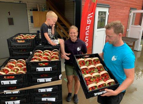 """Marianne Hoås Moxness og Kai Emil Moxness har """"gått i læra"""" i mange år. Kai Emil helt siden har klarte å snakke og springe - og Marianne de siste fem åra. Fire år gamle Fredrik kan allerede mye om jordbær. Ikke minst hvordan den røde bæra smaker."""