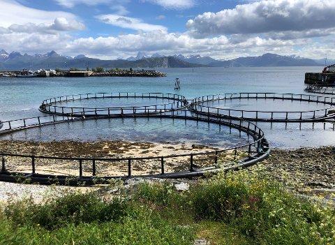 Forutsigbarhet: Kommuner i Salten og Ofoten samarbeider for å få en mer forutsigbar forvaltning av sine sjøarealer.