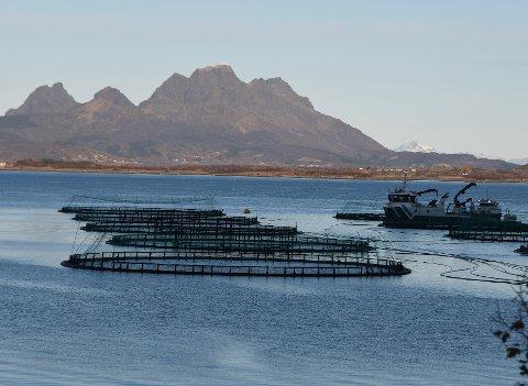 Ny søknad: Cermaq Norway ønsker enda en oppdrettskonsesjon i Sagfjorden.
