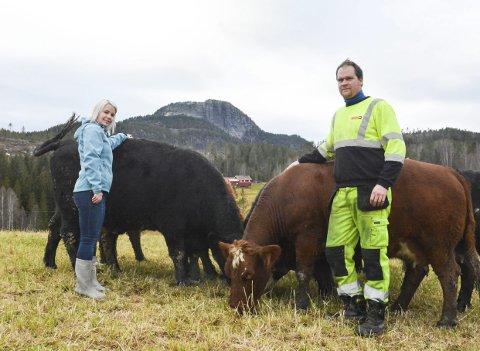VIL ØKE: Lillann Skatvedt og Morten Narumshagen har i dag en besetning på 20 såkalte «mordyr» – altså kuer som skal få kalver. De ønsker å øke besetningen og livsgrunnlaget på gården, men er fortsatt usikre på om de tør investere.