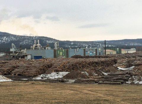 Fylkesråd for næring, Ingelin Noresjø (KrF),  mener ytterligere vern av skog i Nordland kan få konsekvenser for Arbor Hattfjelldal.