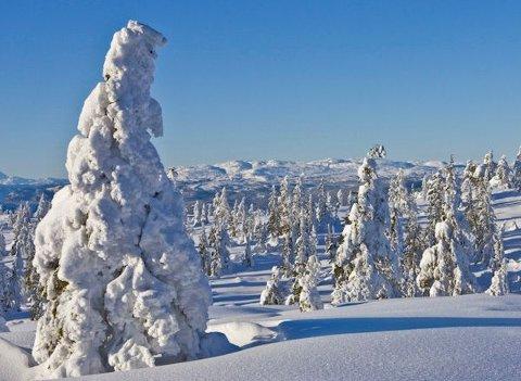 I dag er kulturminnene i Knutefjell vernet, men ikke skogen.