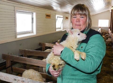 - Nå starter lammingen for fullt og jeg har ikke plass til alle lammene jeg venter inni fjøset. Jeg kan heller ikke slippe dem ut i snøen, sier sauebonde Anne Kari Leiråmo Snefjellå.